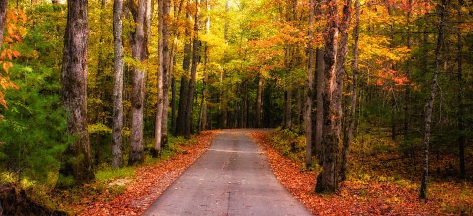 Fall-Road-Glow
